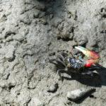 イソガニの飼育に最適な水槽の大きさや選び方